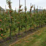 Tęczowy Ogród sady